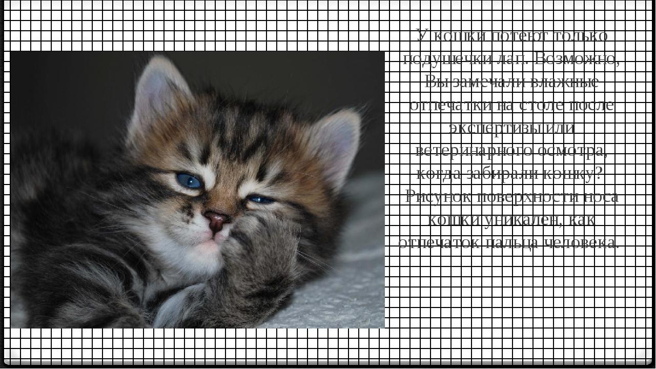 У кошки потеют только подушечки лап. Возможно, Вы замечали влажные отпечатки...