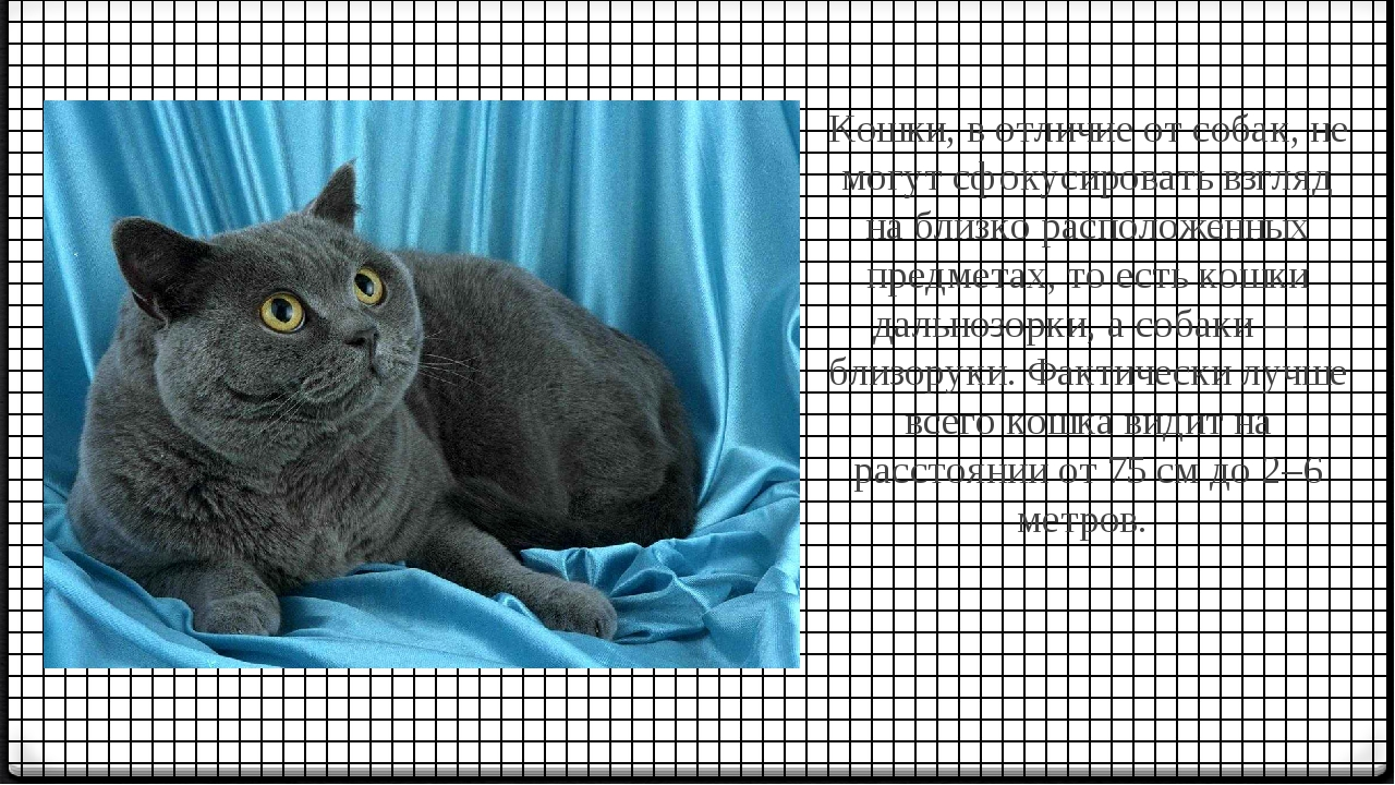 Кошки, в отличие от собак, не могут сфокусировать взгляд на близко расположе...
