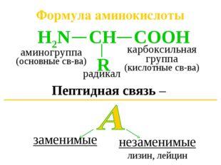 Формула аминокислоты Пептидная связь – карбоксильная группа (кислотные св-ва)