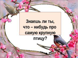 Знаешь ли ты, что – нибудь про самую крупную птицу?