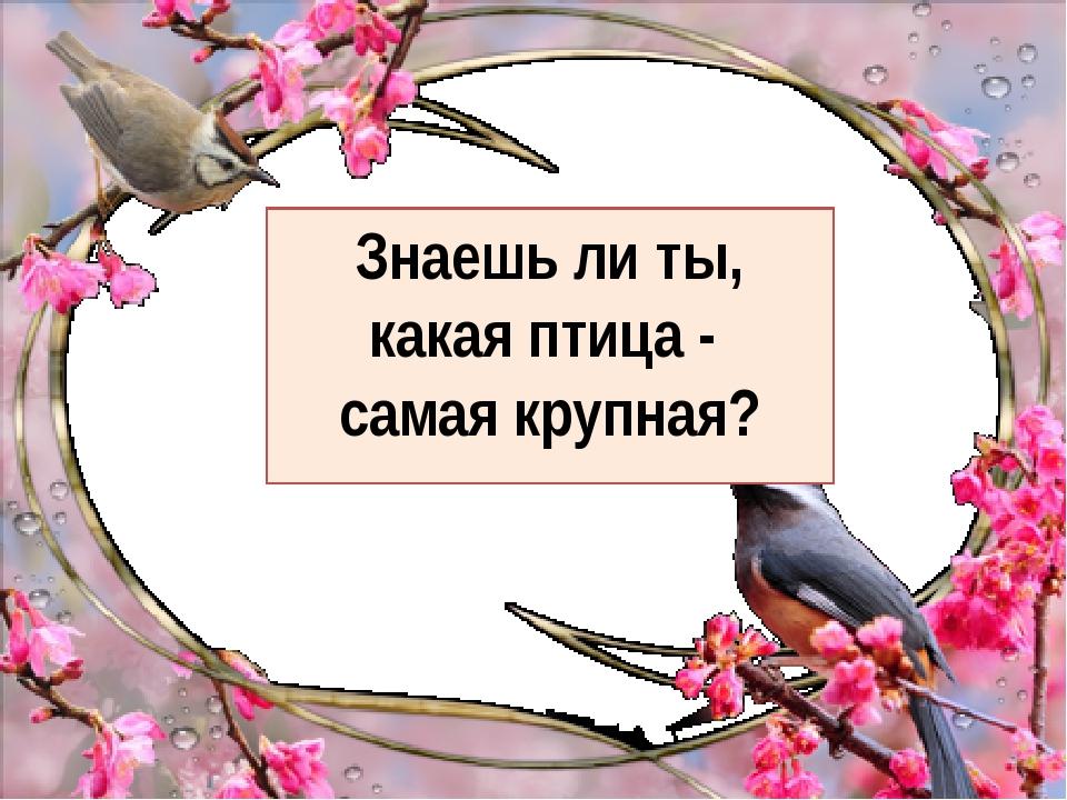 Знаешь ли ты, какая птица - самая крупная?