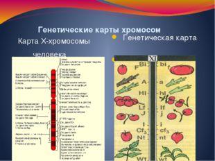 Генетические карты хромосом Генетическая карта хромосомы томата Карта X-хром