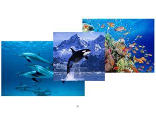 На земле много воды: ОКЕАНЫ, МОРЯ, Озёра, РЕКИ. В НИХ ЖИВУТ Самые РАЗНЫЕ подв