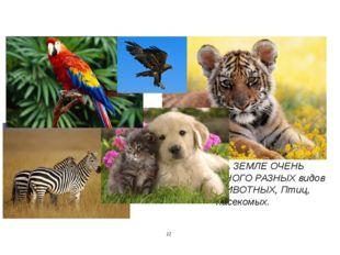 НА ЗЕМЛЕ ОЧЕНЬ МНОГО РАЗНЫХ видов ЖИВОТНЫХ, Птиц, насекомых. 12