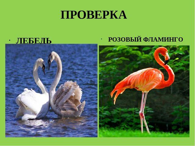 ПРОВЕРКА ЛЕБЕДЬ РОЗОВЫЙ ФЛАМИНГО