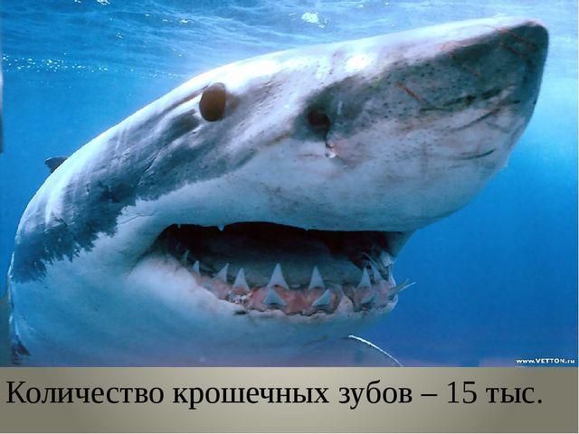 Количество крошечных зубов – 15 тыс.