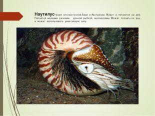Наутилус-моря юго-восточной Азии и Австралии. Живут и питаются на дне. Питает