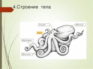 4.Строение тела