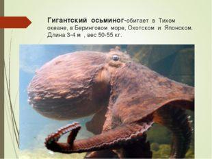 Гигантский осьминог-обитает в Тихом океане, в Беринговом море, Охотском и Япо