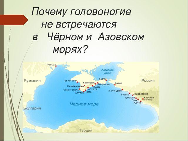 Почему головоногие не встречаются в Чёрном и Азовском морях?