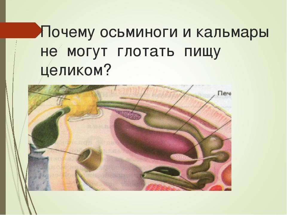 Почему осьминоги и кальмары не могут глотать пищу целиком?