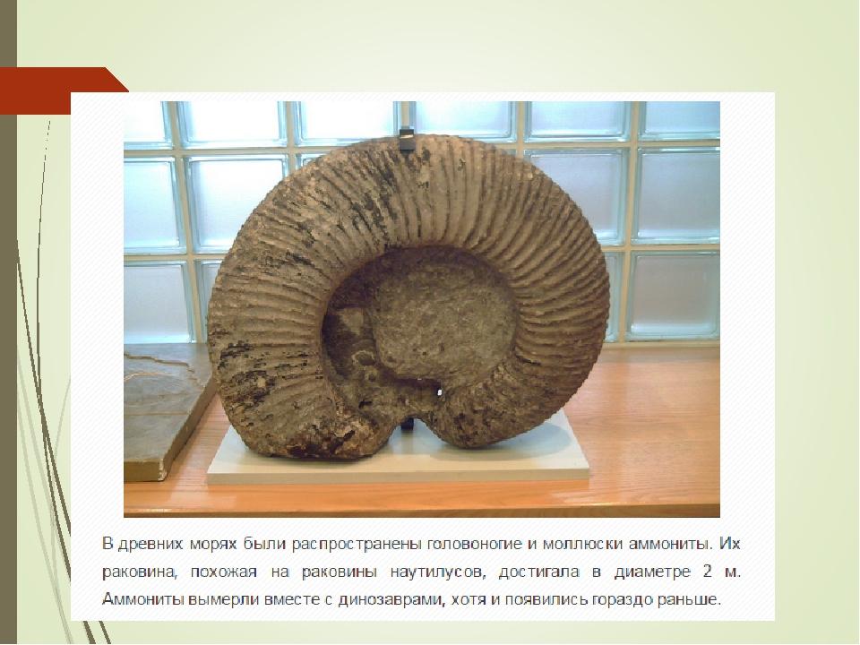 Вымершие головоногие моллюски: