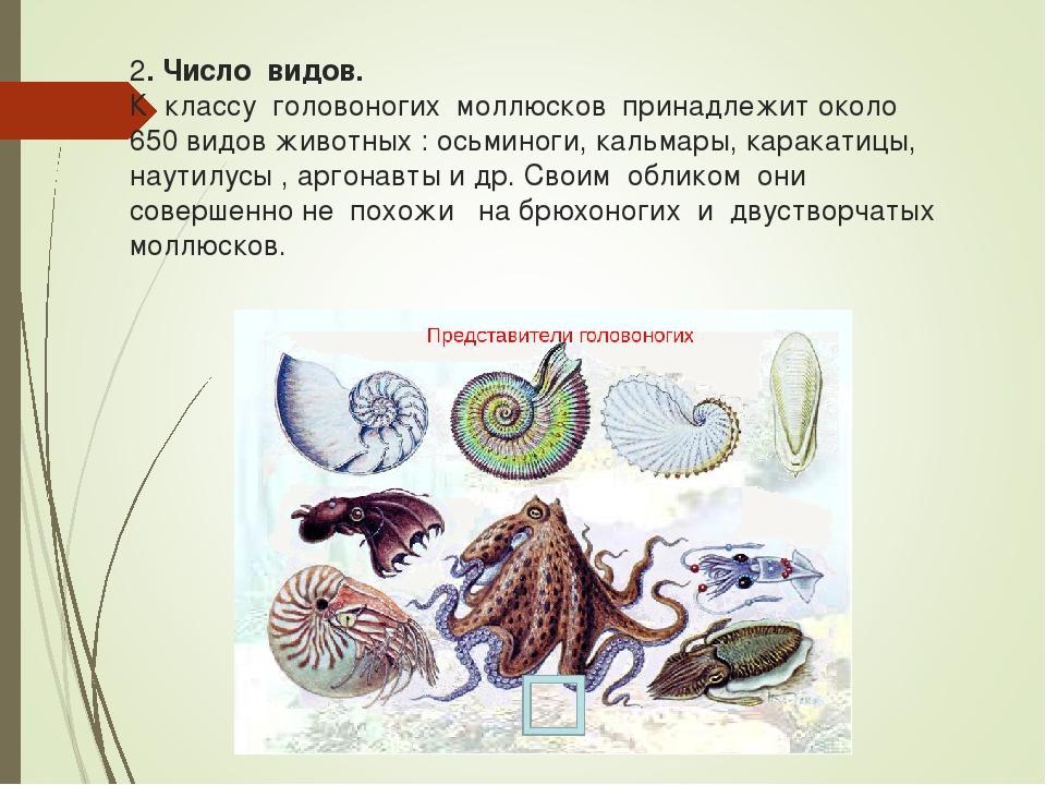 2. Число видов. К классу головоногих моллюсков принадлежит около 650 видов жи...