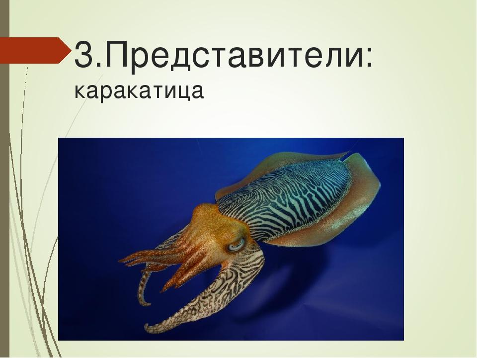 3.Представители: каракатица