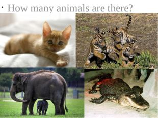 How many animals are there?