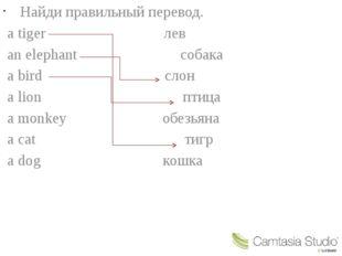 Найди правильный перевод. a tiger лев an elephant собака a bird слон a lion