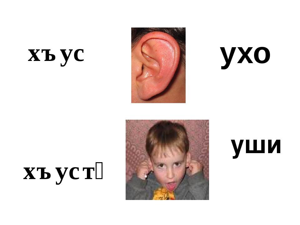 хъус хъустӕ уши ухо