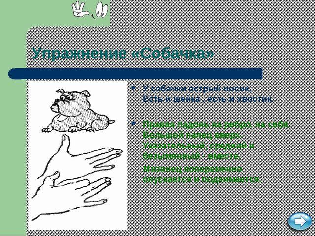 Упражнение «Собачка» У собачки острый носик, Есть и шейка , есть и хвостик. П...