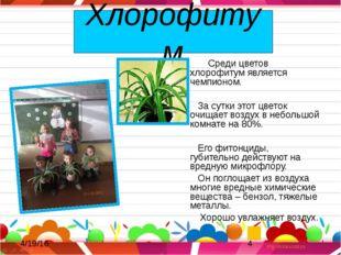Хлорофитум Среди цветов хлорофитум является чемпионом. За сутки этот цветок
