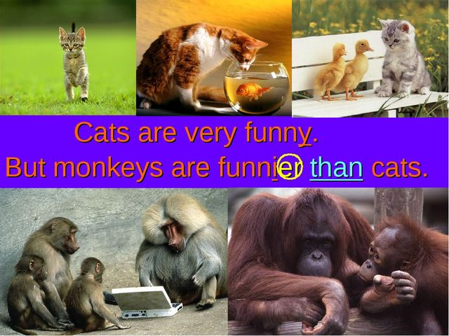 Cats are very funny. But monkeys are funnier than cats.