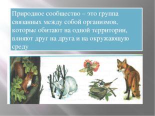 Природное сообщество – это группа связанных между собой организмов, которые