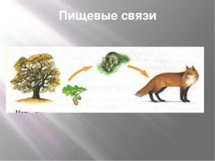 Пищевые связи