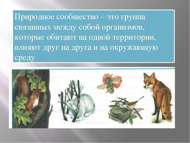 Природное сообщество – это группа связанных между собой организмов, которые...