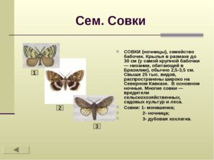 Сем. Совки СОВКИ (ночницы), семейство бабочек. Крылья в размахе до 30 см (у с
