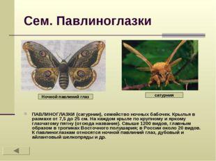 Сем. Павлиноглазки ПАВЛИНОГЛАЗКИ (сатурнии), семейство ночных бабочек. Крылья