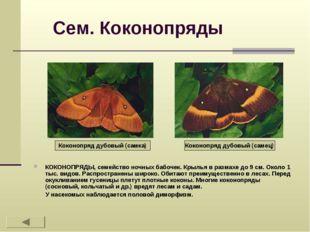Сем. Коконопряды КОКОНОПРЯДЫ, семейство ночных бабочек. Крылья в размахе до 9