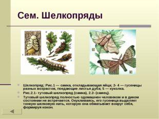 Сем. Шелкопряды Шелкопряд: Рис.1 — самка, откладывающая яйца; 2- 4 — гусеницы