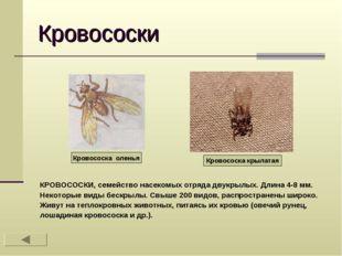 Кровососки КРОВОСОСКИ, семейство насекомых отряда двукрылых. Длина 4-8 мм. Не