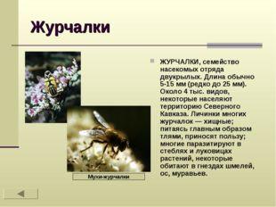 Журчалки ЖУРЧАЛКИ, семейство насекомых отряда двукрылых. Длина обычно 5-15 мм