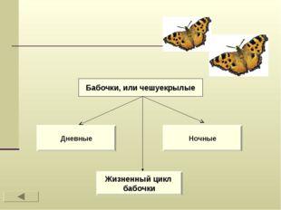 Дневные Ночные Жизненный цикл бабочки Бабочки, или чешуекрылые