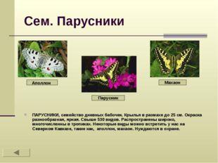 Сем. Парусники ПАРУСНИКИ, семейство дневных бабочек. Крылья в размахе до 25 с