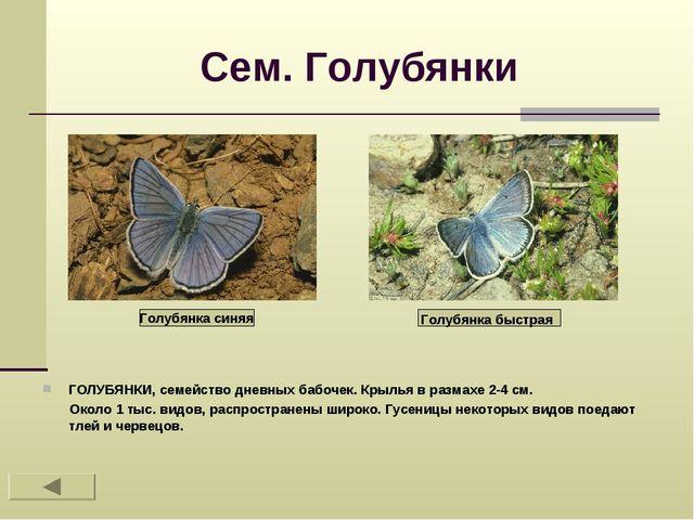 Сем. Голубянки ГОЛУБЯНКИ, семейство дневных бабочек. Крылья в размахе 2-4 см....