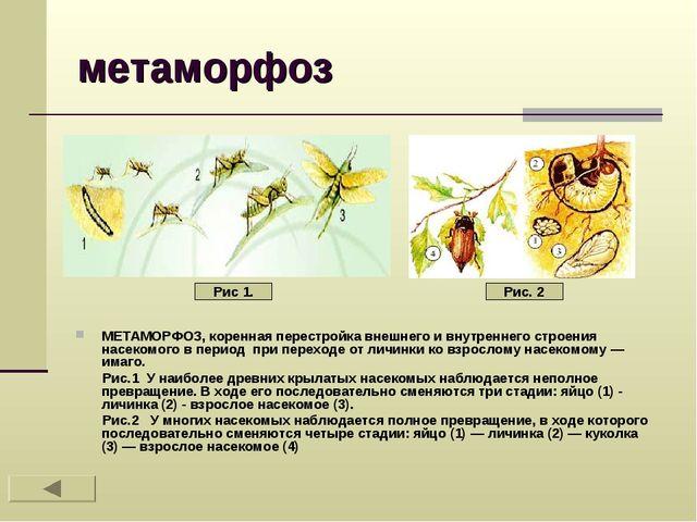 метаморфоз МЕТАМОРФОЗ, коренная перестройка внешнего и внутреннего строения н...