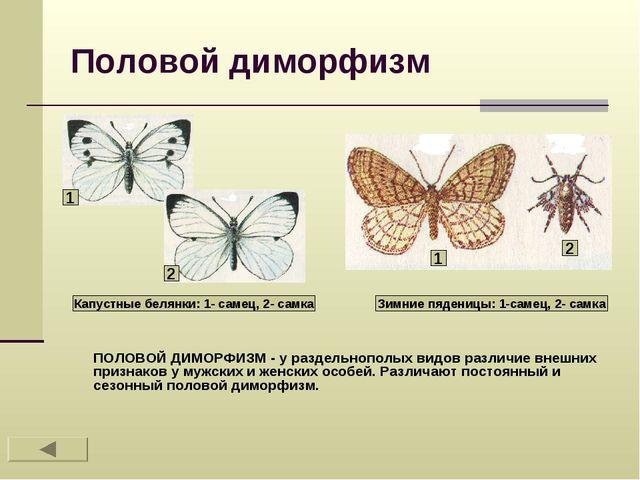 Половой диморфизм ПОЛОВОЙ ДИМОРФИЗМ - у раздельнополых видов различие внешних...