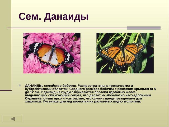 Сем. Данаиды ДАНАИДЫ, семейство бабочек. Распространены в тропических и субтр...