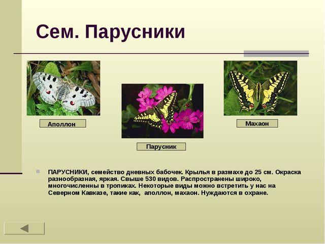 Сем. Парусники ПАРУСНИКИ, семейство дневных бабочек. Крылья в размахе до 25 с...