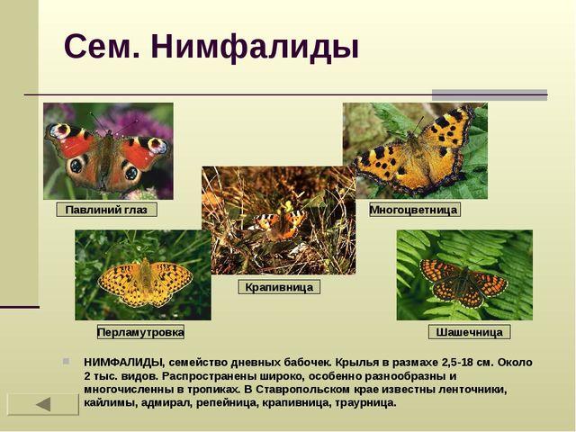 Сем. Нимфалиды НИМФАЛИДЫ, семейство дневных бабочек. Крылья в размахе 2,5-18...