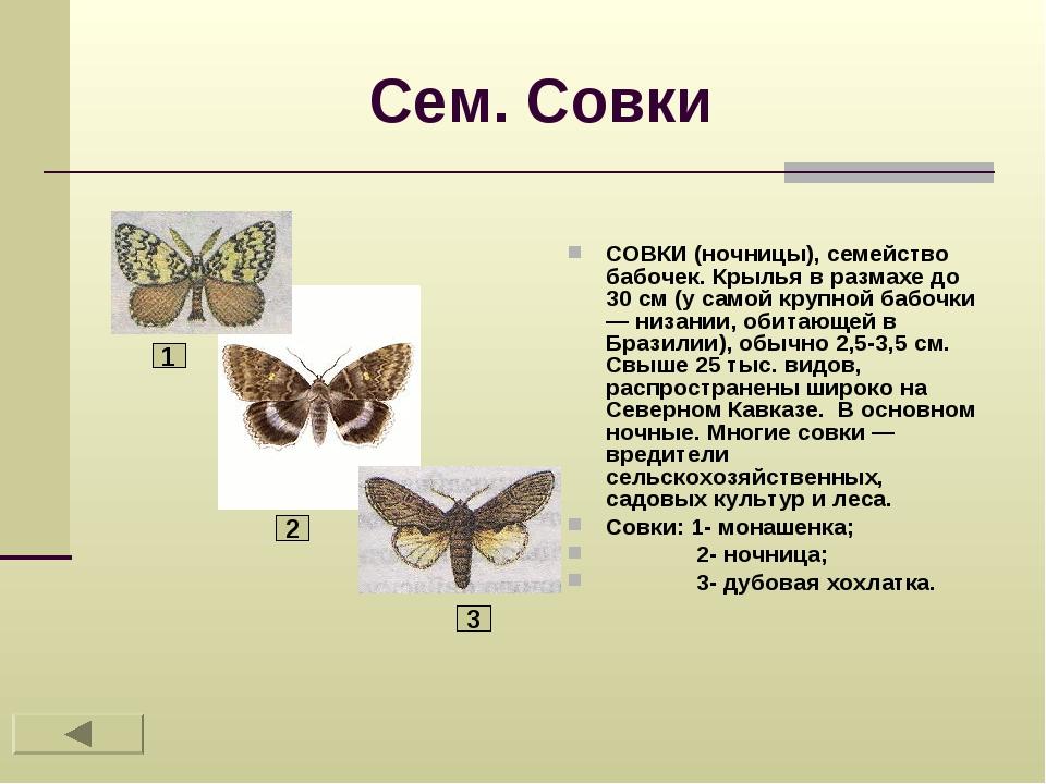 Сем. Совки СОВКИ (ночницы), семейство бабочек. Крылья в размахе до 30 см (у с...