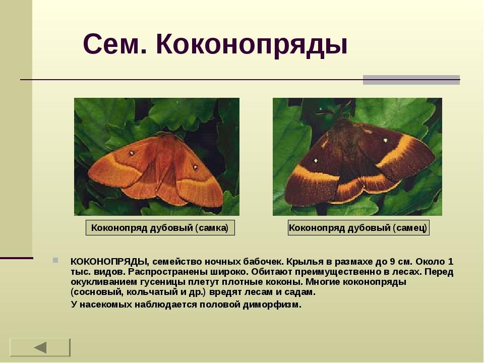Сем. Коконопряды КОКОНОПРЯДЫ, семейство ночных бабочек. Крылья в размахе до 9...