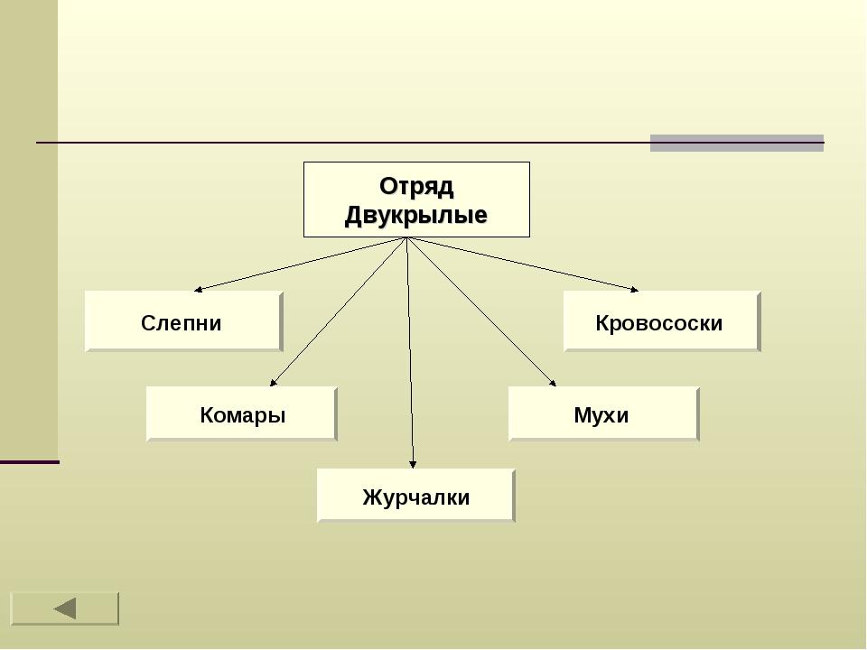 Отряд Двукрылые Слепни Мухи Комары Кровососки Журчалки