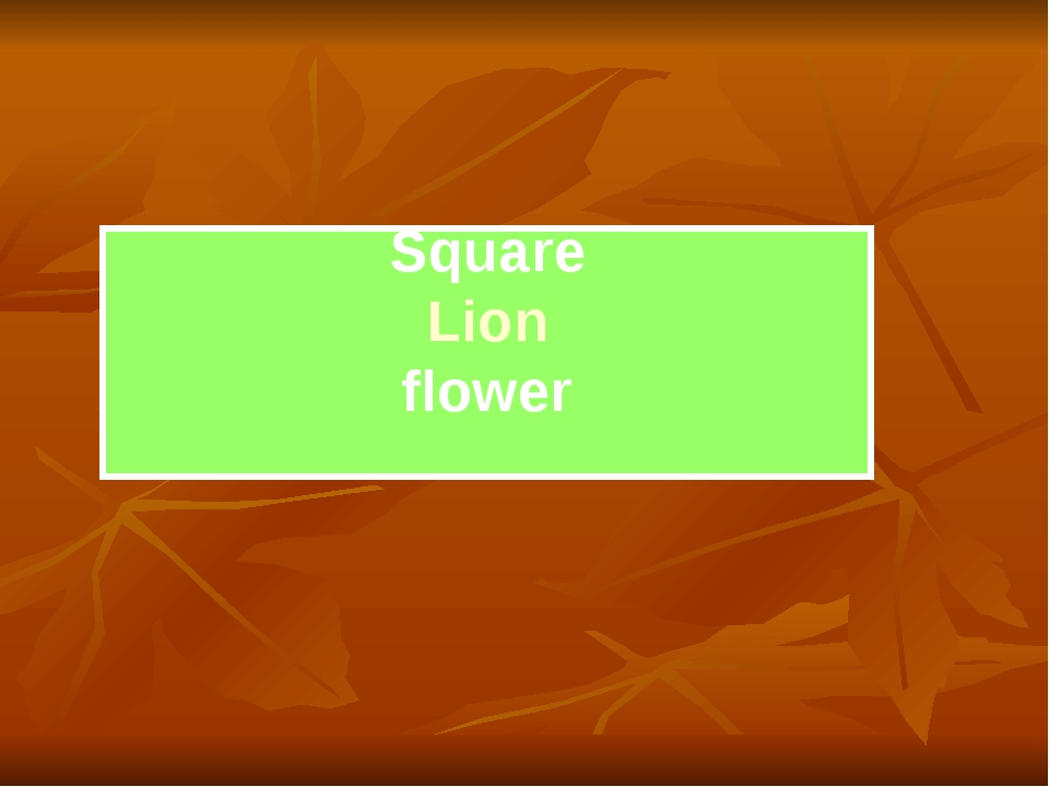 Square Lion flower