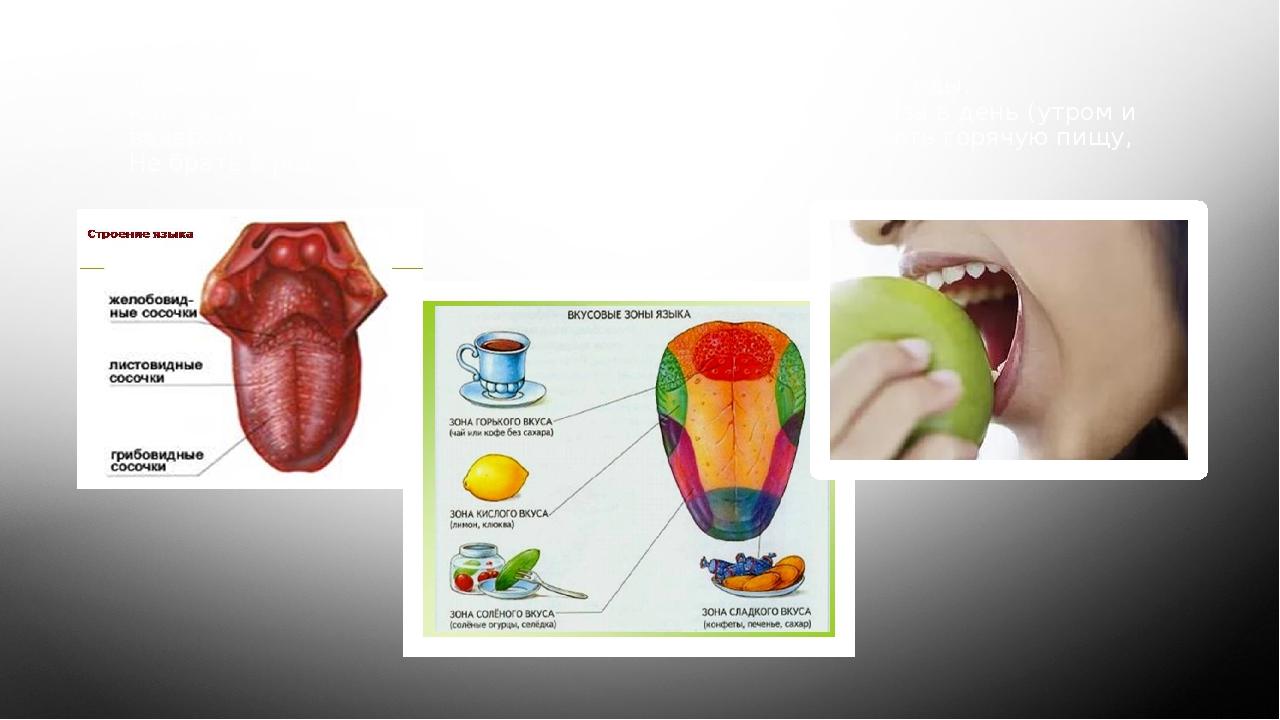Язык – орган вкуса. Язык помогает человеку различать вкус еды. Как беречь орг...