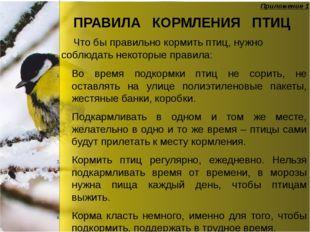 ПРАВИЛА КОРМЛЕНИЯ ПТИЦ Во время подкормки птиц не сорить, не оставлять на ули