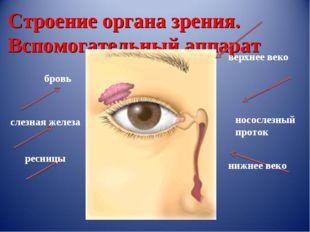 Строение органа зрения. Вспомогательный аппарат бровь слезная железа ресницы