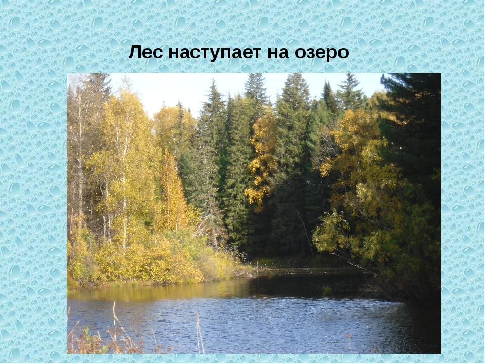 Лес наступает на озеро