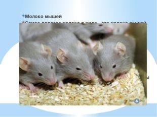 Молоко мышей Самое дорогое молоко в мире - это молоко мышей. Оказывается, са